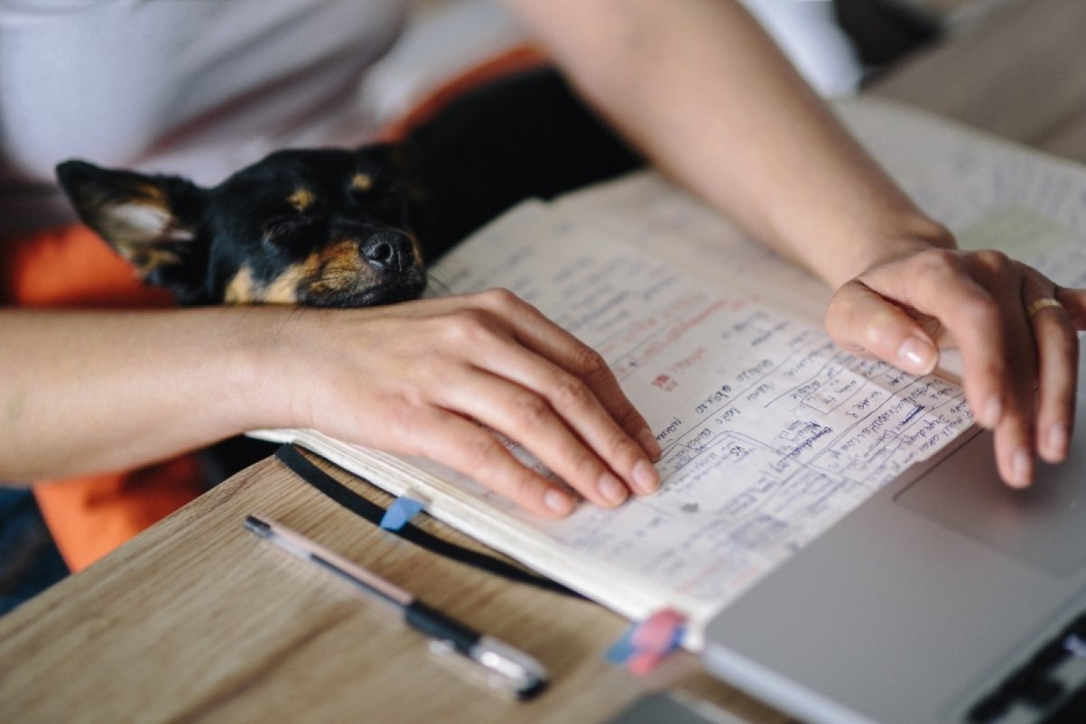 how to write a good cover letter for a job