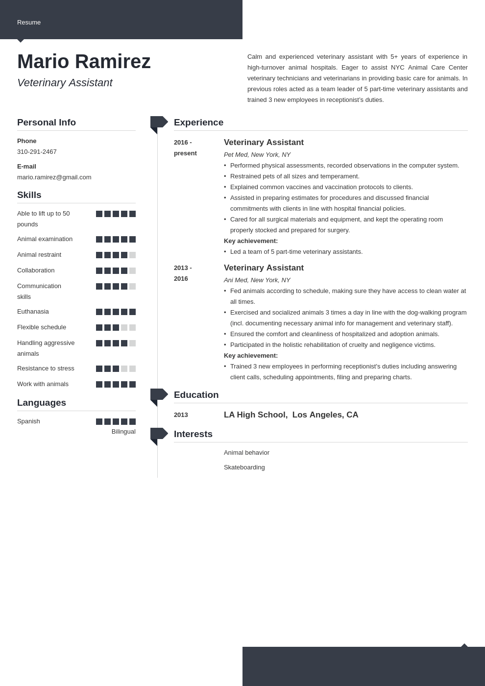 veterinary assistant resume example template modern